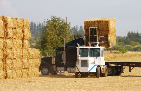 A  heavy loader processing straw from a Willamette Valley wheat farm near Corvallis Oregon. Stock Photo