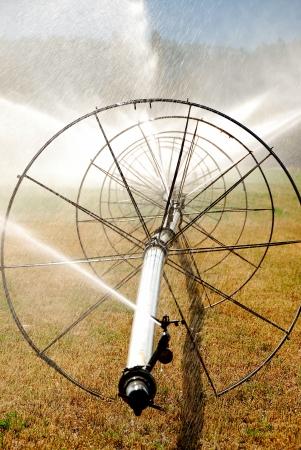 irrigate: wheel irigation of a alfalpa field in the fertile Garden Valley area of Roseburg Oregon