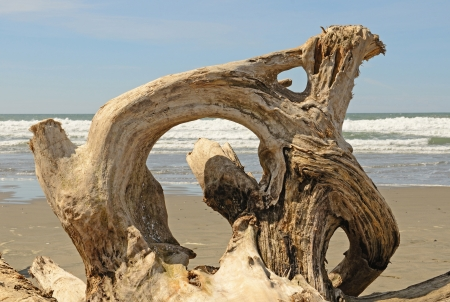 Interesting root wad driftwood on the beach near Bandon Oregon
