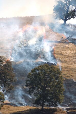 a natural cover fire in light grass and trees in an agricultural area in western Oregon