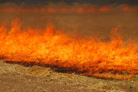 Oat grass stubble field burning on Mike Richie property in the Umpqua Valley near Roseburg Oregon