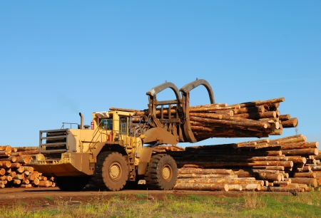 industrial machinery: Log Loader working the log yard at a lumber processing mill in the Winchester area of Roseburg Oregon   This mill specializes in small logs  Stock Photo