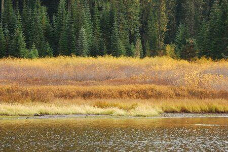 cicuta: Hemlock Lake en la cuenca del r�o Little y largo del camino de Little River en las Monta�as Cascade justo por encima de Glide Oreg�n Foto de archivo