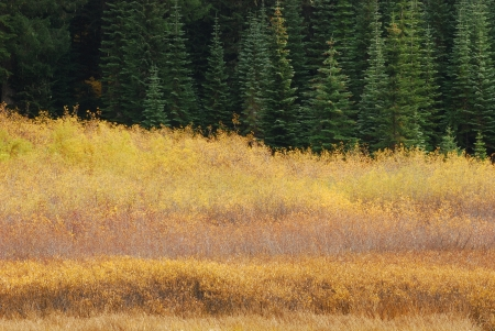 hemlock: Hemlock Lake en la cuenca del río Little y largo del camino de Little River en las Montañas Cascade justo por encima de Glide Oregón Foto de archivo