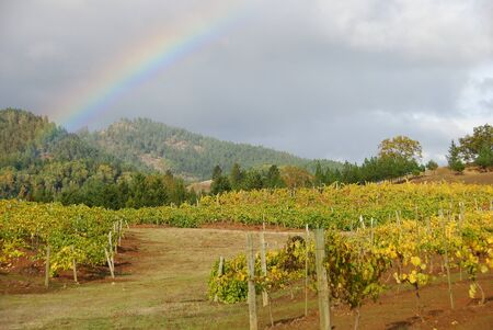 wine road: Rain clouds and a sunset over the fall colored vineyard at Giradet Wine Cellars in the Tenmile area west of Roseburg Oregon on Reston Road. Stock Photo