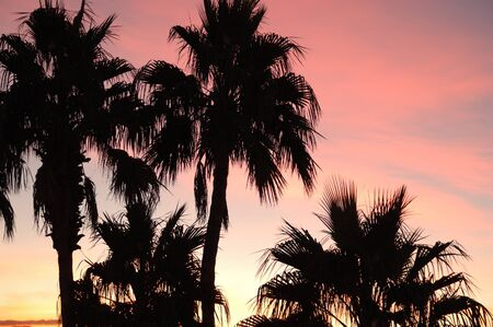 Sunset and Palms in Las Vegas photo
