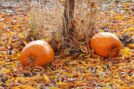 pumpkin patch: following Halloween at Brozio Farm Stand in Winston OR