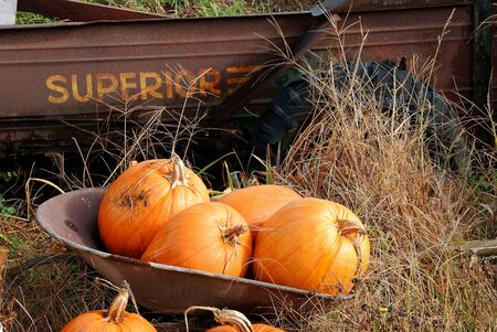 Superior Pumpkins following Halloween at Brozio Farm Stand in Winston OR photo