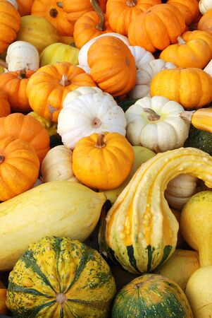winston: Fall Gourds in a Bin, following Halloween at Brozio Farm Stand in Winston OR