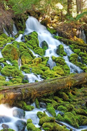 Clearwater Falls in the North Umpqua River drainage along State Hwy 138 just below Diamond Lake Oregon    photo