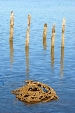 coquille: Fune o cavo vecchio nel fiume Coquille Bay.