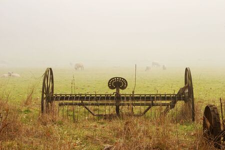 Old spring harrow and sheep in a field off of Fort McKay road between Sutherlin and Oakland OR on a foggy winter morning