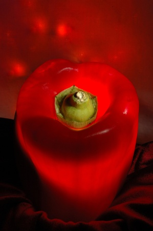 bell peper: Using light from behind with a sweet red bell peper