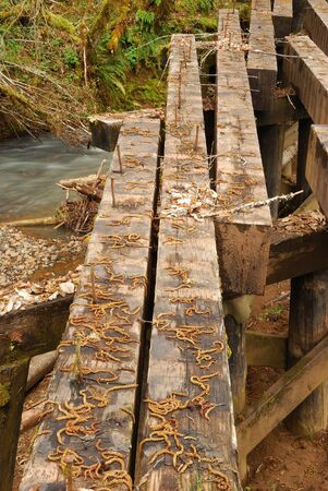 logging railways: Old logging railroad bridge crossing Gassy Creek East of Sutherlin Oregon off of Nonpareil Road at Gassy Creek Road  Stock Photo