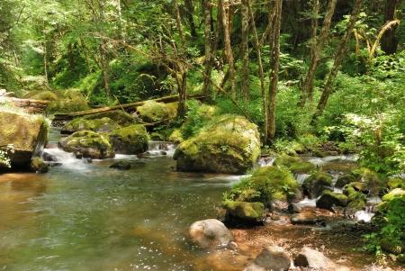 coquille: Lost Creek incontra l'East Fork del fiume Coquille off di Coos Bay Wagon Road vicino Sitkum O Archivio Fotografico