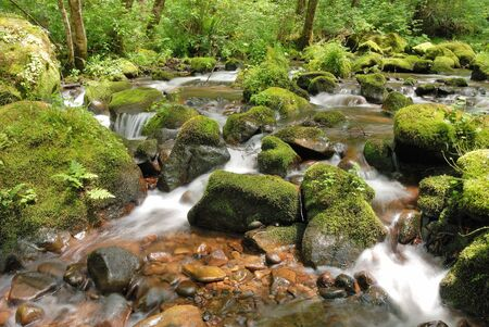 coquille: Lost Creek Meets the East Fork of the Coquille River off of Coos Bay Wagon Road near Sitkum OR