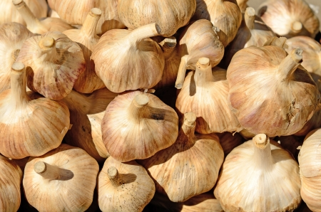 A vendor sales fresh white garlic at a local farmers market in Oregon