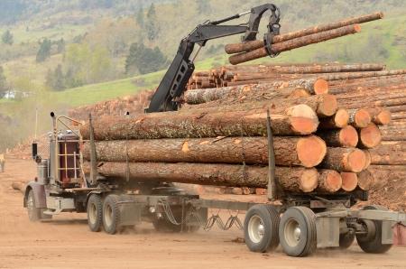 Un cami?n de registro proporciona una carga de troncos a la yarda del registro en una f?brica de procesamiento de la madera que se especializa en peque?os troncos