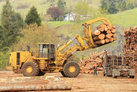 A large wheeled front end log loader unloading a log truck at a log yard at a lumber processing mill that specializes in small logs Stock Photo