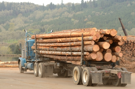 A log truck delivers a load of logs to the log yard at a lumber processing mill that specializes in small logs Stock Photo