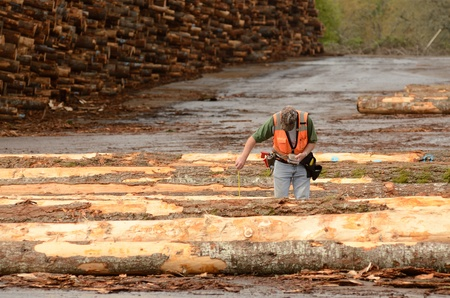 scaler: log scaler working the log yard at a lumber processing mill that specializes in small logs