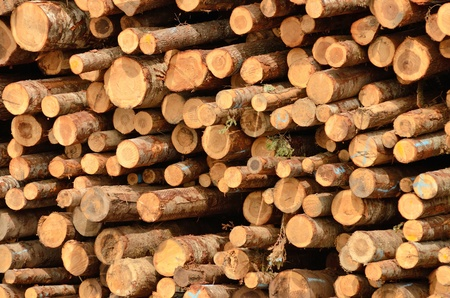specializes: Stack of logs in the log yard at a lumber processing mill that specializes in small logs