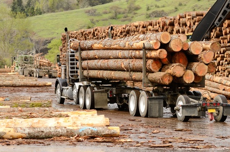 A log truck delivers a load of logs to the log yard at a lumber processing mill that specializes in small logs 스톡 콘텐츠