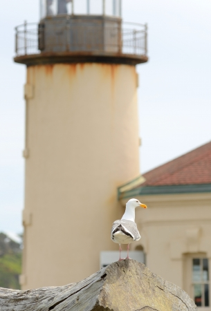 coquille: Sea gull sitting on driftwood with the Coquille River Lighthouse in the background at Bullards Beach State Park near Bandon Oregon Stock Photo