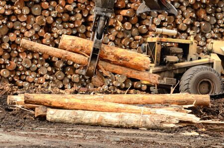 machinery: Fir logs being moved for loading onto a commercial ship for export to Asia on the mill dock in Coos Bay and North Bend Oregon Stock Photo
