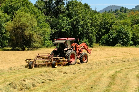 tine: Agriculture tractor pulling a rotory bar tine rake through a field of cut grass hay to windrow for the baler for winter livestock feed