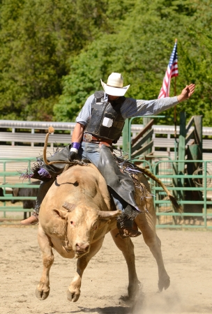 A cowboy rides a bull during the bull riding competition at a small summer rodeo in Oregon