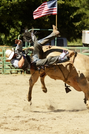 arena rodeo: A cowboy rides a bull during the bull riding competition at a small summer rodeo in Oregon