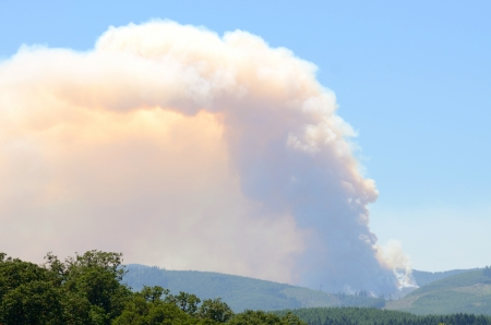 Small natural cover fire developing in logging slash in early summer in western Oregon photo