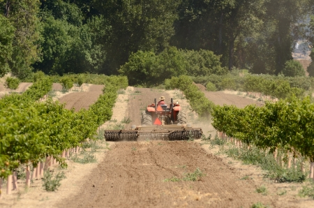 Agricultural tractor uses a harrow disc to process soil between new pair orchard trees Stok Fotoğraf - 21956386