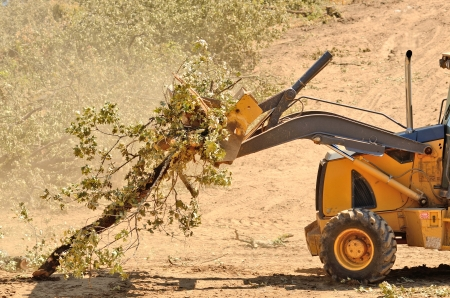 Backhoe loading up brush following a cleanup of trees from a new commercial construction development