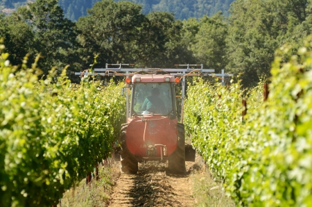 Small tractor spraying pesticides on a early summer crop of wine grapes photo