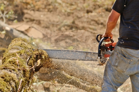 logger: Logger triming and delimbing oak trees at a new commerical construction development Stock Photo