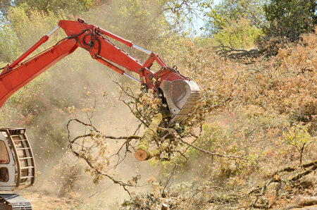 track hoe excavator clearing trees and brush from a hillside in preperation for a new commerical construction development photo
