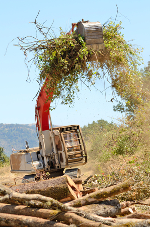 track hoe excavator clearing trees and brush from a hillside in preperation for a new commerical construction development