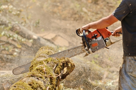 cutter: Logger triming and delimbing oak trees at a new commerical construction development Stock Photo