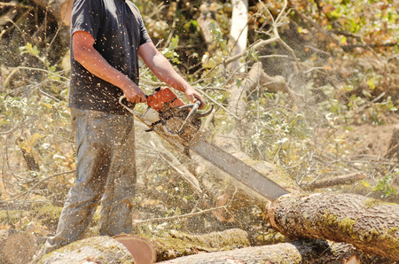 Logger triming and delimbing oak trees at a new commerical construction development Stock Photo - 22388326