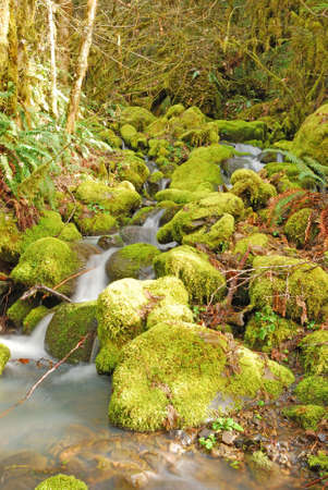 Small forest stream falling to the North Umpqua River, Umpqua National Forest near Roseburg Oregon photo