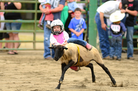 busting: MYRTLE CREEK, OR - JUNE 12  Kids sheep riding event at the South Douglas Rodeo  June 12, 2011 in Myrtle Creek, OR