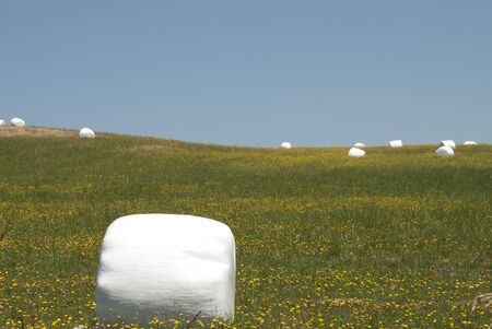 marshmellow: Marshmellow Fields - large round bales of hay wrapped in plastic for protection
