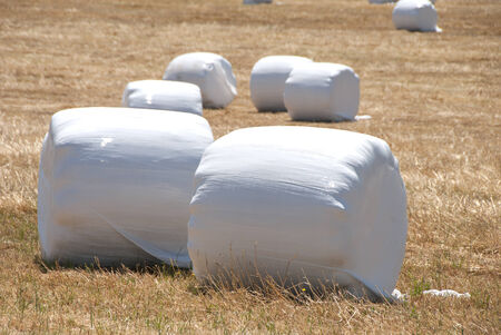 marshmellow: Marshmellow Fields - large round bales of hay wrapped in plastic for protection during