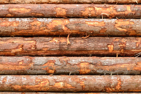 destined: Douglas fir logs destined for the mill on railroad cars in Oregon Stock Photo