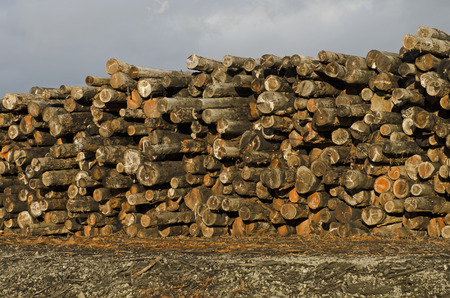 lumber mill: Stack of fir and cedar logs at a lumber mill