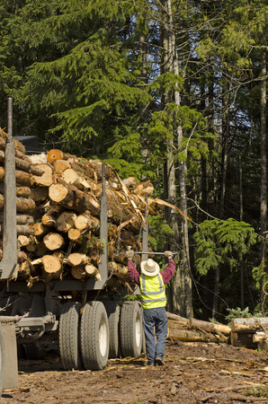 pile engine: A log loader or forestry machine loads a log truck at the site landing with the driver securing the load in southern Oregon