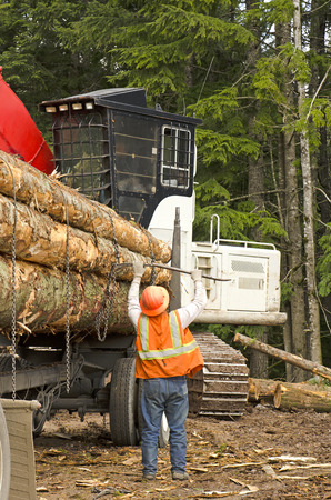 hauling: A log loader or forestry machine loads a log truck at the site landing with the driver securing the load in southern Oregon