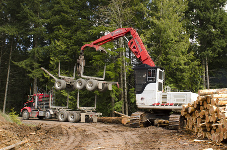 mule train: A log loader or forestry machine loads the rear trailer on a log truck at the site landing in southern Oregon Stock Photo